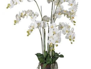 Orchid Flower Display - White & Cream Orchid Arrangement - Plant Potted