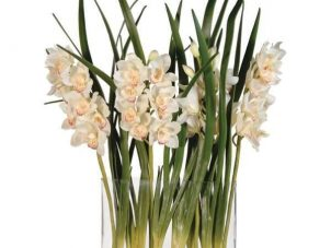 Orchid Flower Display - Cream Orchid Cymbidium Leaves - Glass Vase