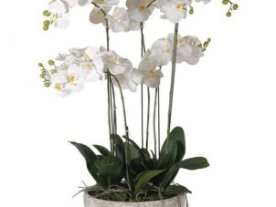 Orchid Flower Display - Large White Orchid Display - Stone Effect Bowl