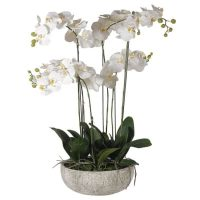 Orchid Flower Arrangement - Large White Orchid Flower Display - Stone Effect Bowl