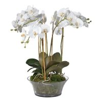 Orchid Flower Arrangement - White Orchid & Moss - Shallow Glass Round Bowl