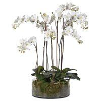 Orchid Flower Arrangement - White Orchids & Moss - Shallow Round Glass Bowl