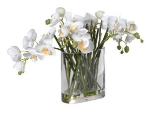 Orchid Flower Display - Orchid Phalaenopsis Arrangement - Glass Vase