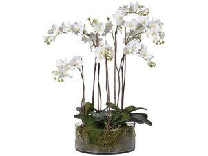Orchid Flower Display - White Orchids & Moss - Shallow Round Glass Bowl