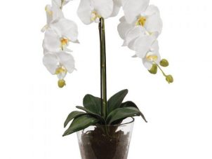 Orchid Flower Display - White Orchid Luxury Plant - Glass Vase
