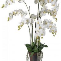 Orchid Flower Arrangement - White & Cream Orchid Arrangement - Plant Potted