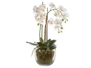 Orchid Flower Display - White Orchid Arrangement - Glass Bowl