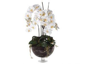 Orchid Flower Display - White Orchid Phalaenopsis - Glass Footed Bowl