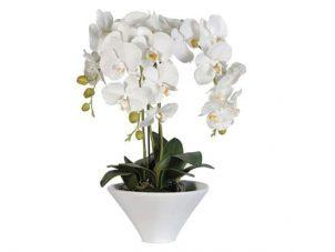 Orchid Flower Display - White Orchids - White Ceramic Pot