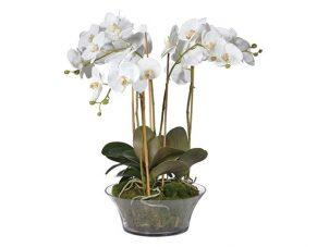 Orchid Flower Display - White Orchids & Moss - Shallow Glass Round Bowl