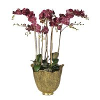 Damson Orchid Phalaenopsis Large Plant - Antiqued Gold Decorative Pot