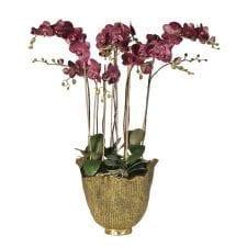 Damson Orchid Phalaenopsis Large Plant - Antiqued Gold Decorative Pot
