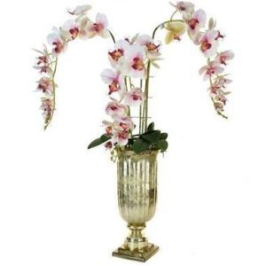 Orchid Display - Orchid Phalaenopsis Arrangement - Gold Glass Urn