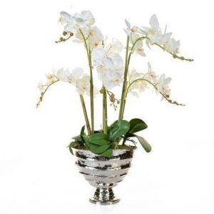 Orchid Flower Display - Large White Orchid Display - Chrome Vase