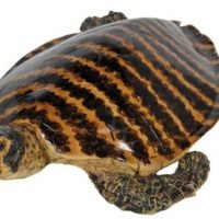 Turtle - Large Polished Shell Life-size Turtle Statue