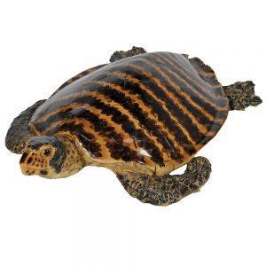 Turtle Statue - Large Polished Shell Life-size Turtle Statue