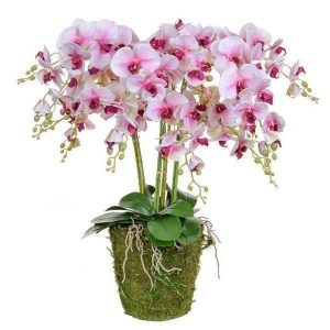 Orchid Flower Display - Pink Orchids & Moss - Pot Yourself Style