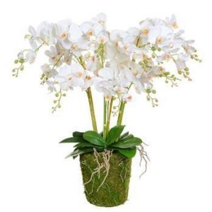 Orchid Flower Display - White Orchids & Moss - Pot Yourself Style